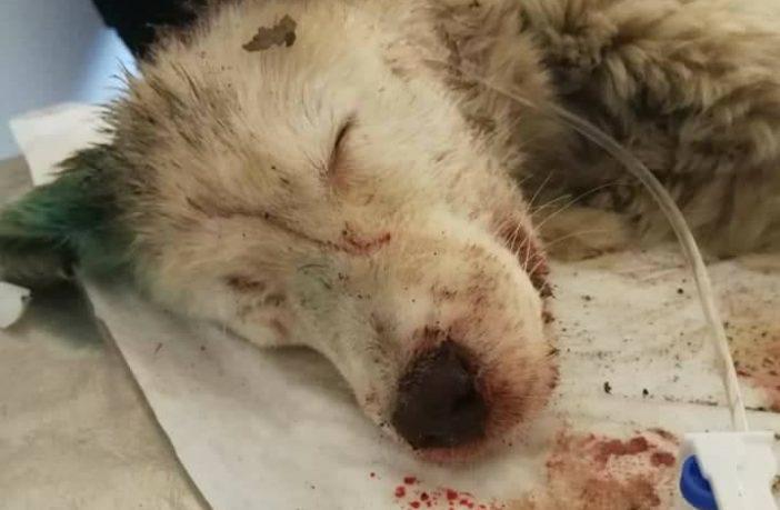 cucciola uccisa