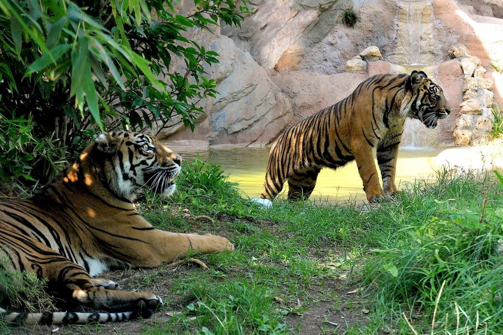 bioparco tigri