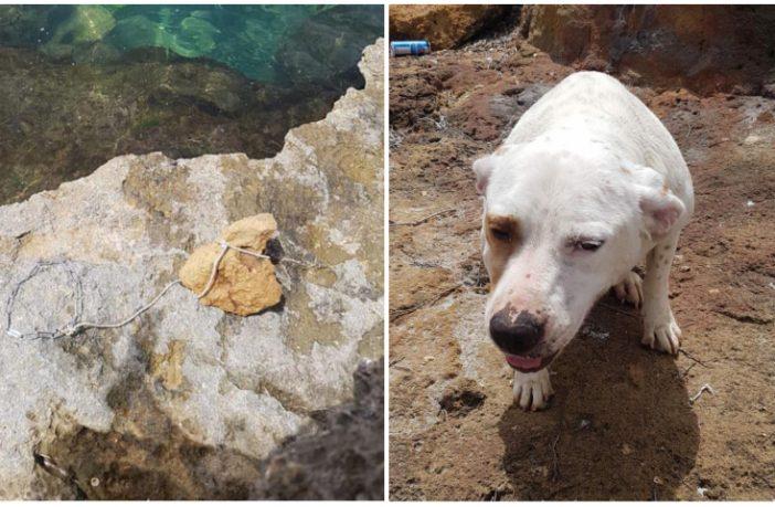 difesa dei cani mia pietra
