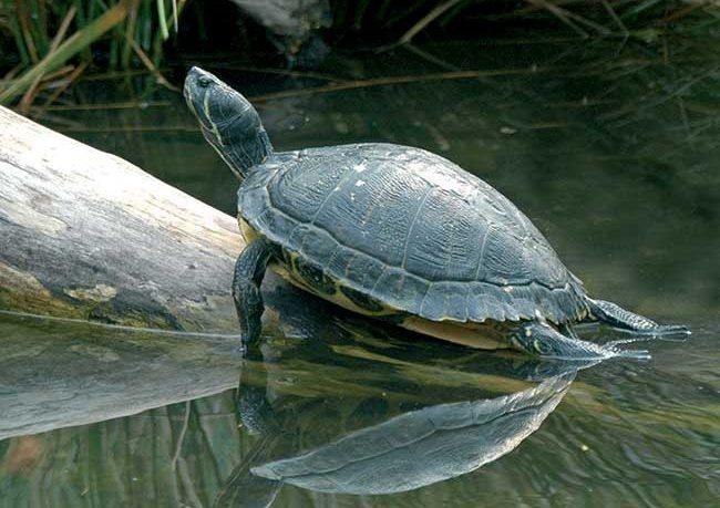 M5S statue per cani tartarughe