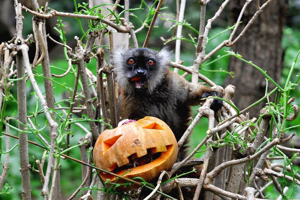 halloween bioparco