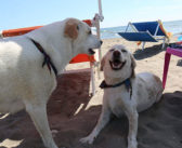 Per Pasqua riapre BAUBEACH®, la prima spiaggia per cani liberi e felici d'Italia