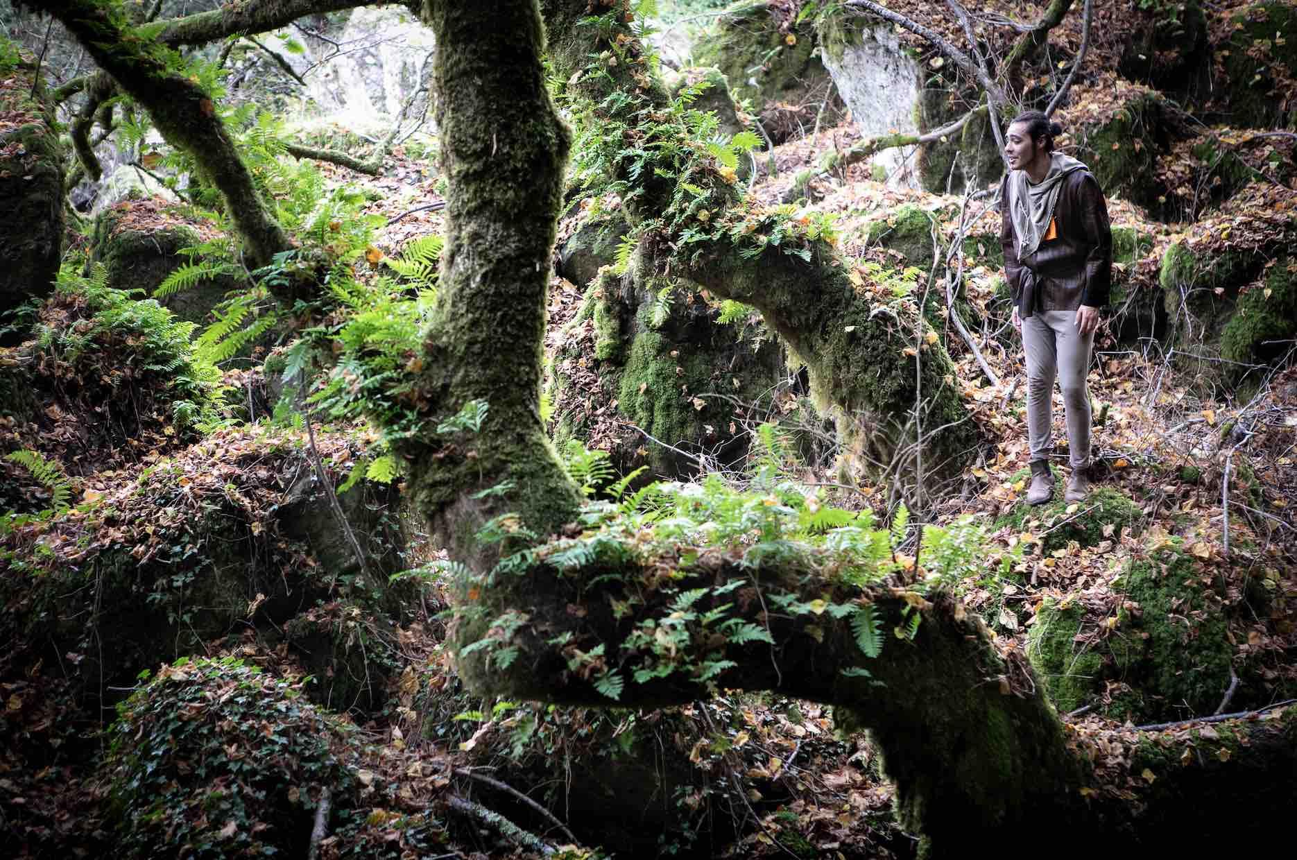 bosco di biancaneve