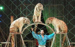 circo togni