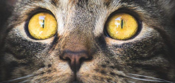 Covid-19 e animali – LNDC dice NO alla sperimentazione