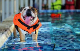 Vacanze Dog-Friendly
