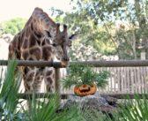 Al Bioparco promozione speciale Halloween