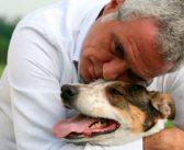 L'Italia vip che aiuta gli animali in difficoltà: da Wertmuller, Mennoia e de Grenet, tutti in campo per LNDC Animal Protection